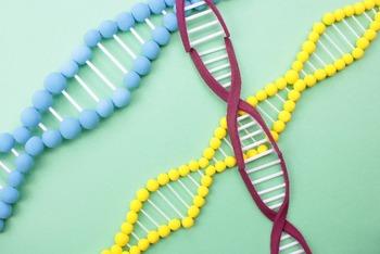 アトピーと遺伝子(フィラグリン欠損遺伝子)