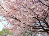 善福寺2011-4