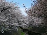 善福寺2012-4-2