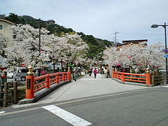 城崎温泉-桜