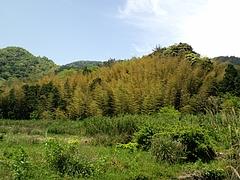 竹の子掘り2009