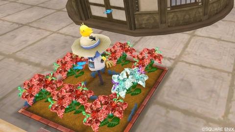 【DQ10】超おたから花の中身すげええええええ!!!のサムネイル画像