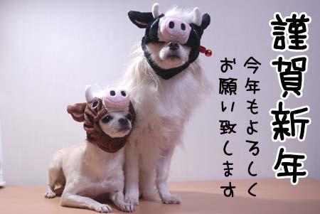 2009年ご挨拶〜♪ レオン&しずく