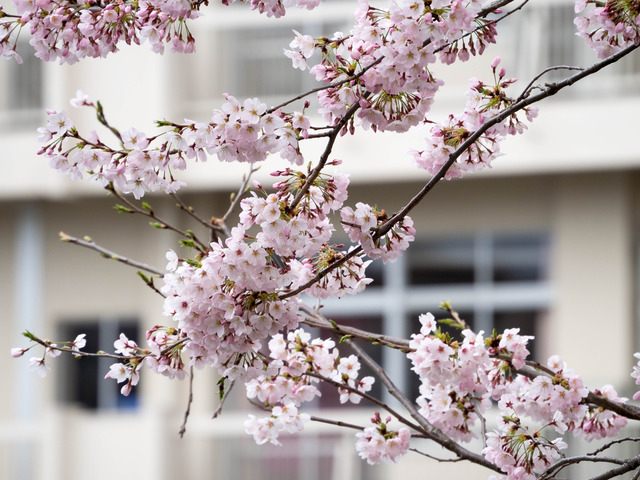 春の坂道4