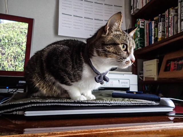 窓越しの猫