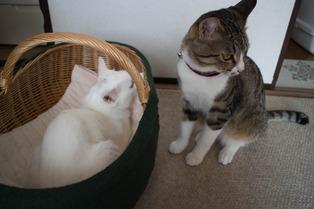 愛猫達12