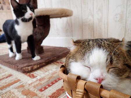 猫カフェれおん5