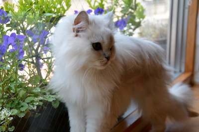Cattail3