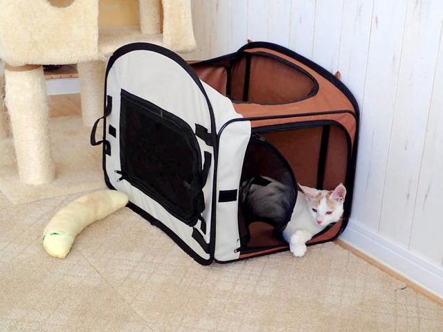 猫カフェ16