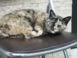 九十九湾の猫