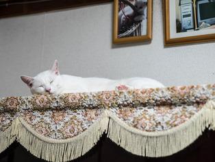 1024愛猫15