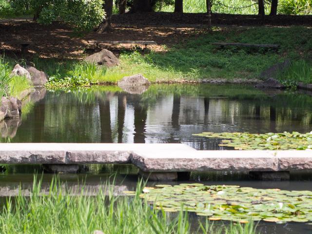 金目親水公園08