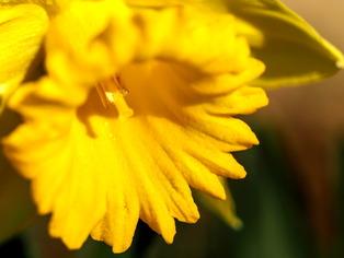 花菜ガーデン6