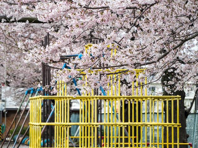 春の坂道1