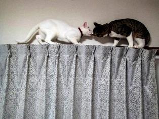 愛猫たち12