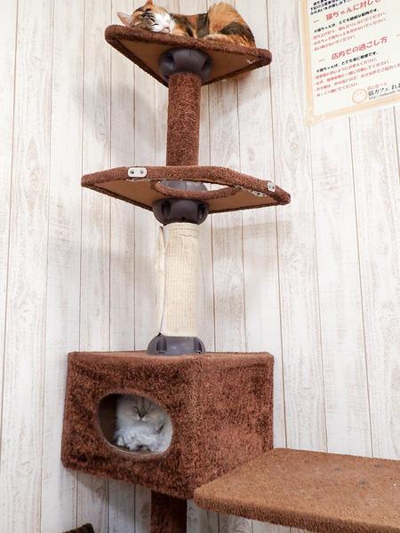 猫カフェれおん23