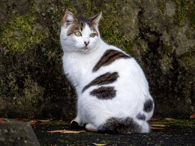 近所猫(<=2km)