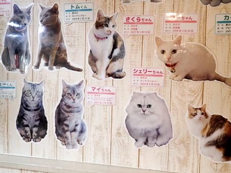猫カフェれおん29