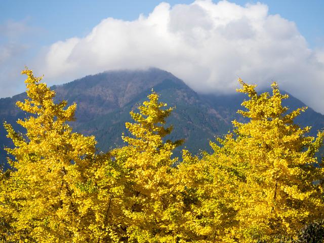 弘法山公園1