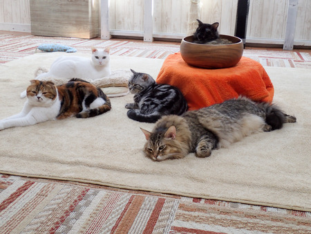 猫カフェれおん22