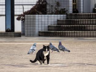 厚木街景(街猫)