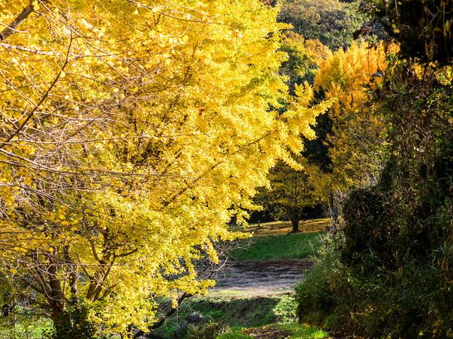 弘法山公園05