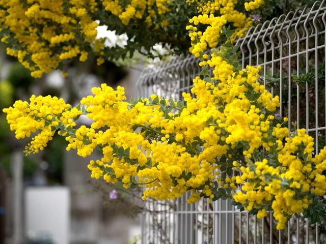 春の坂道14