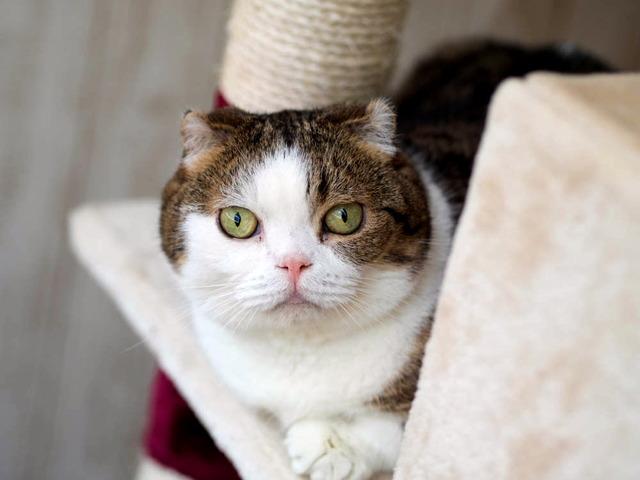 猫カフェ・れおん(4)