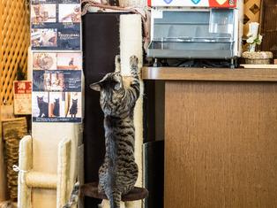 猫喫茶18