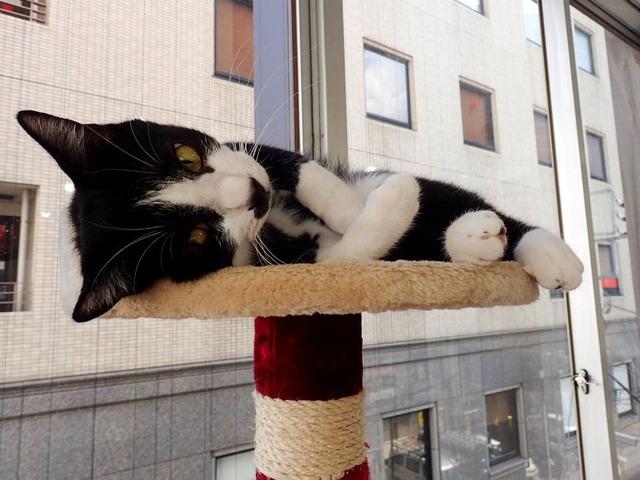 猫カフェ07