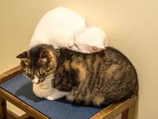 1025愛猫12