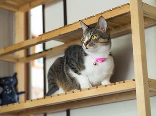 1025愛猫6