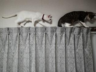 愛猫たち10