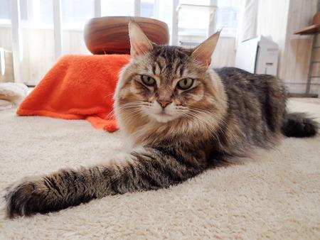 猫カフェれおん15