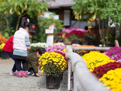 花咲く里山4
