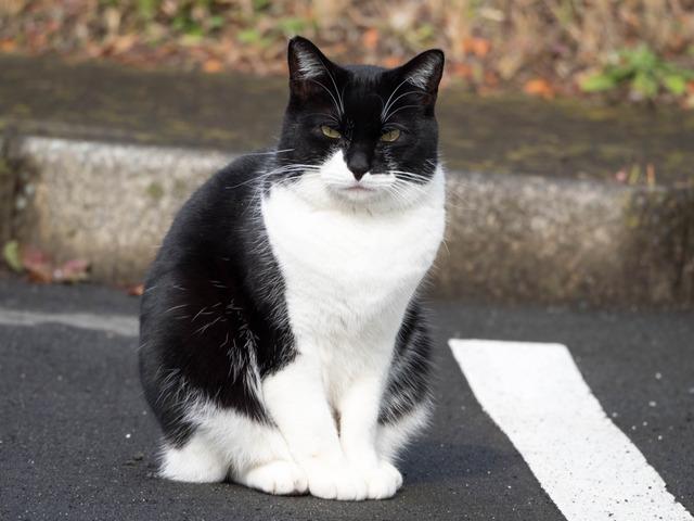 野良猫13