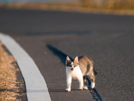 Cat21