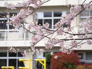 春の坂道5