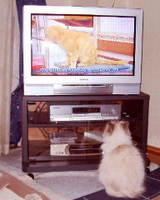 テレビ好きなの?
