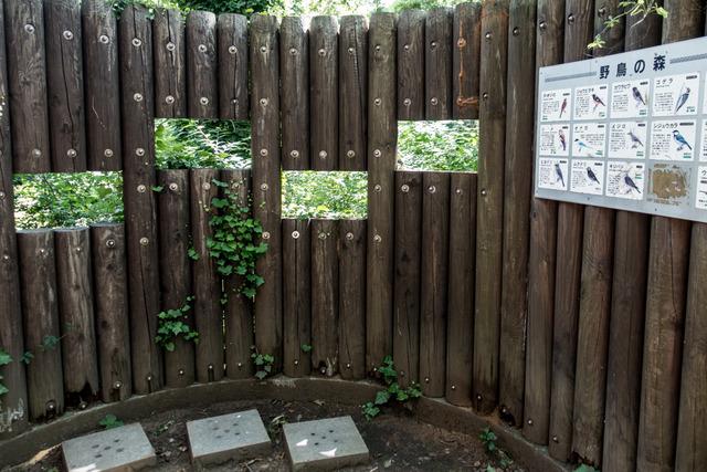 平塚総合公園4