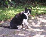三ッ池公園の猫