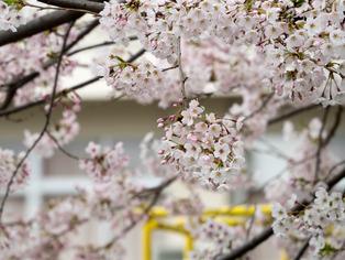 春の坂道6