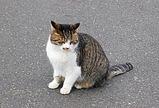 稲毛海浜公園の猫