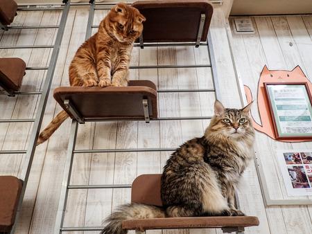 猫カフェれおん18