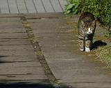 城ヶ島の猫(3)