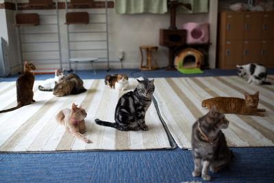 猫カフェ・れおん(2)