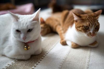 猫カフェ・レオン17