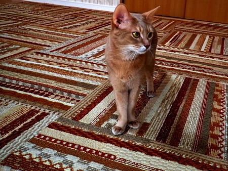 猫カフェれおん6