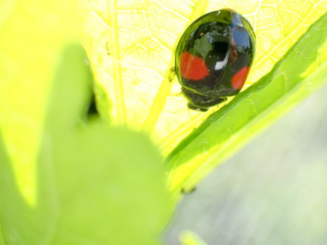 てんとう虫2