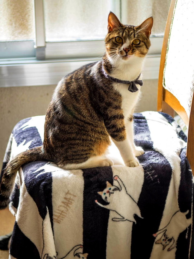 愛猫と街猫